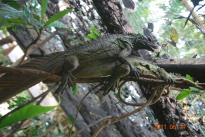 Philippine Lizards Showing Us What To Do There!
